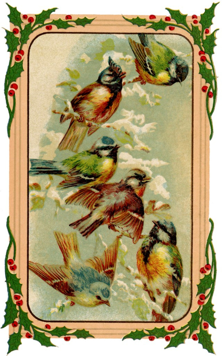 Holiday-Birds-Image-GraphicsFairy-640x1024 (437x700, 407Kb)