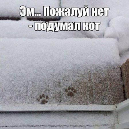 smeshnie_kartinki_141555660545 (450x451, 128Kb)