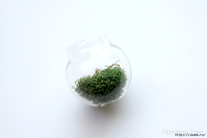Moss-in-little-globe (700x466, 139Kb)