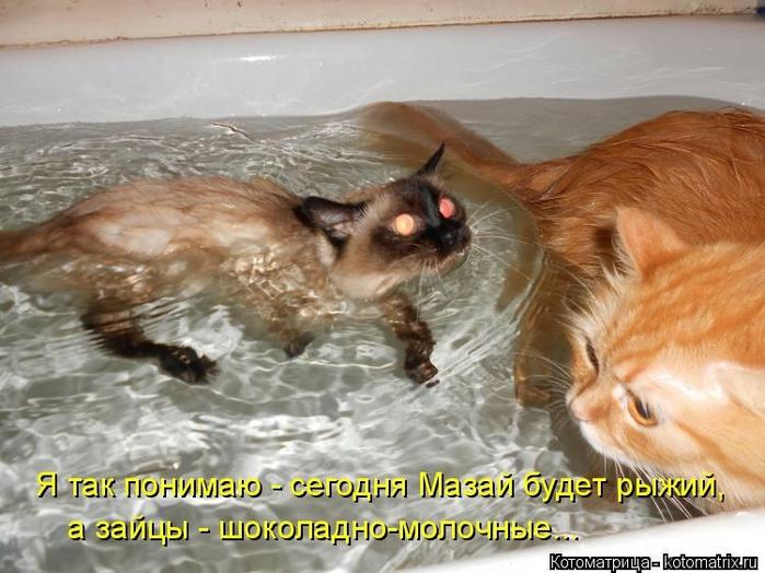 kotomatritsa__ (700x524, 254Kb)