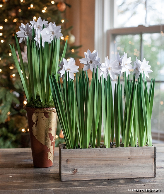 DIY_Metallic_Paper_Paperwhites (560x662, 314Kb)