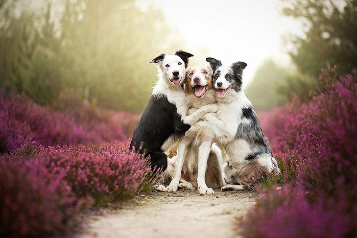 2835299_Dogs_by_Alicja_Zmyslowka_01 (700x466, 78Kb)