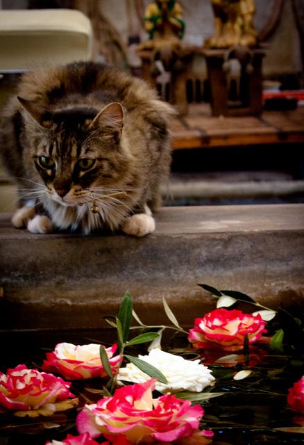 cat (438x640, 242Kb)