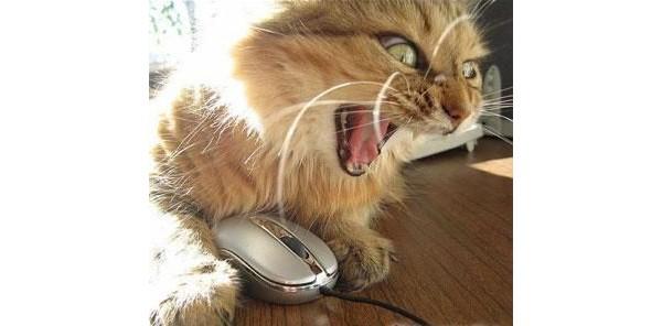 http://img0.liveinternet.ru/images/attach/c/0/118/236/118236770_cat_mousejpg.jpg