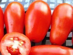 tomaty_francuzskoy_selekcii (250x188, 10Kb)