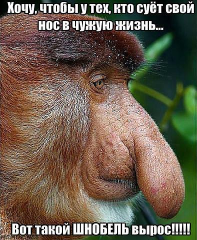 обезьяна (394x480, 71Kb)
