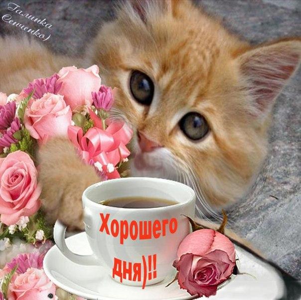 С добрым утром рыжий кот