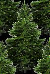 Превью ёлка-9 (102x150, 20Kb)