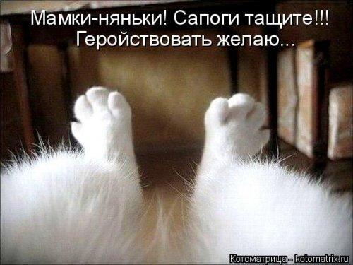 1416587921_kotomatricy-30 (500x375, 143Kb)