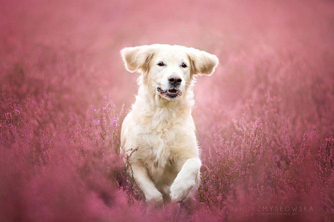 собаки фото 2 (670x446, 169Kb)