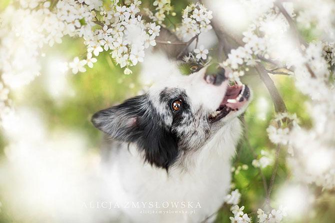 собаки фото 4 (670x447, 186Kb)