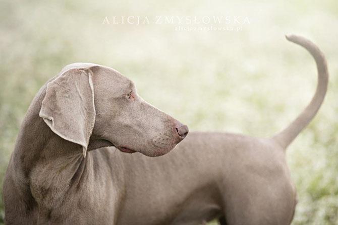 собаки фото 6 (670x447, 126Kb)