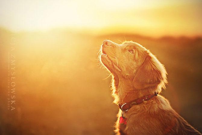 собаки фото 8 (670x447, 138Kb)