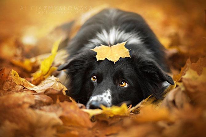 собаки фото 10 (670x447, 190Kb)