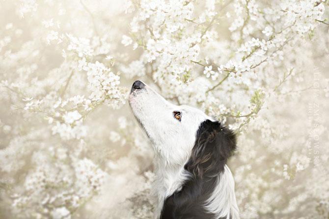собаки фото 12 (670x447, 197Kb)