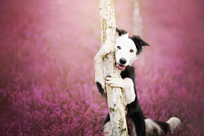 собаки фото 15 (670x446, 178Kb)
