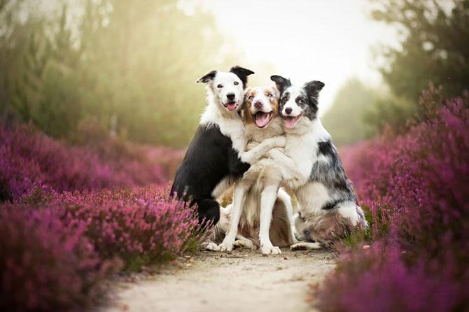 собаки фото 17 (670x446, 188Kb)