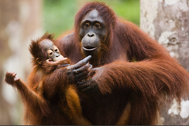5-Time-Amazing Moms-animals (606x404, 124Kb)