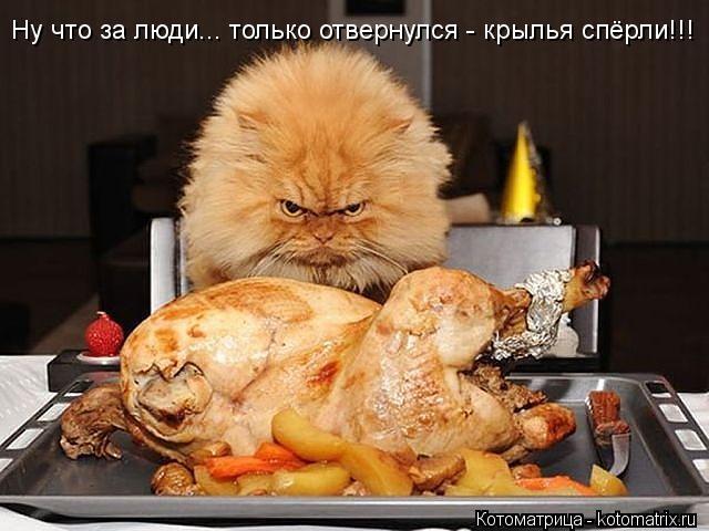 4650338_99418887_large_kotomatritsa__w (640x480, 52Kb)