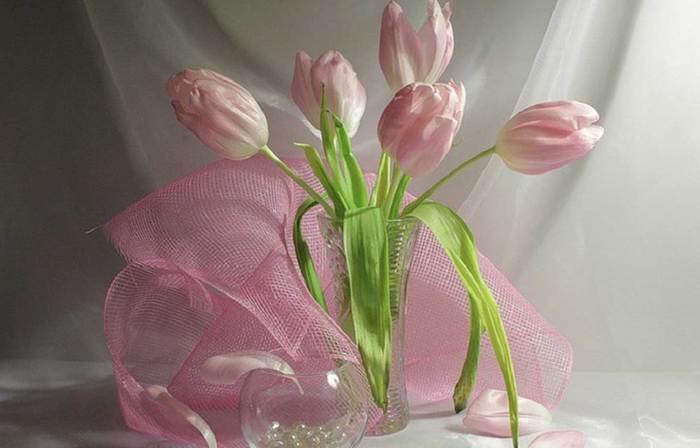тюльпаны (700x448, 30Kb)