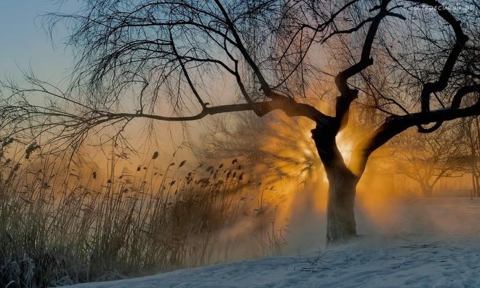 147770_drzewo_snieg_sitowie_zachod_slonca (700x420, 114Kb)