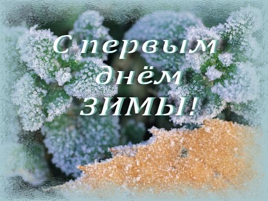 ель зима 18 (550x413, 283Kb)