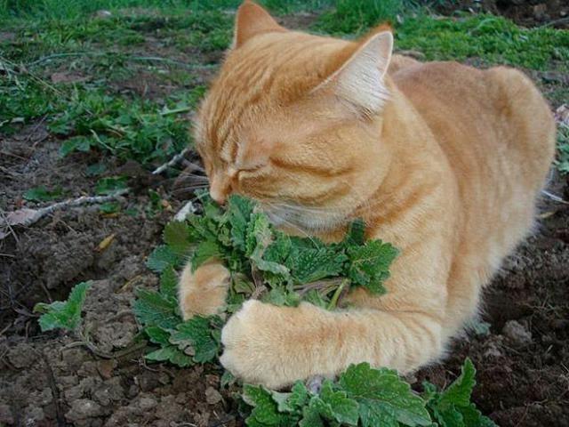смешные фото кошек 1 (640x480, 148Kb)