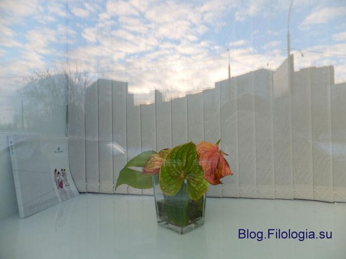 3241858_flower (700x525, 37Kb)