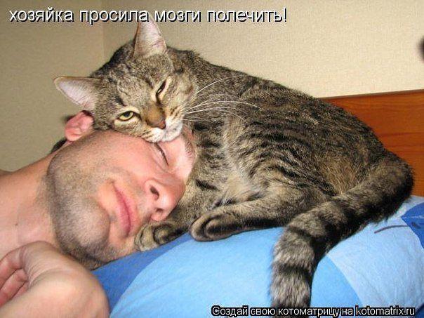 Кошка  на    голове) (604x453, 59Kb)