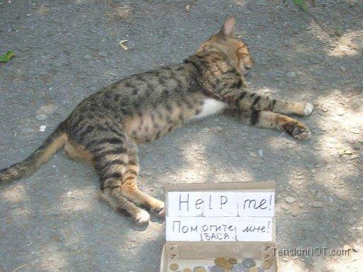 4650338_CatMakingMoney (512x384, 49Kb)