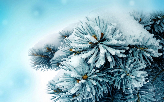 Frosty-wallpapers_1600x1000 (700x437, 258Kb)