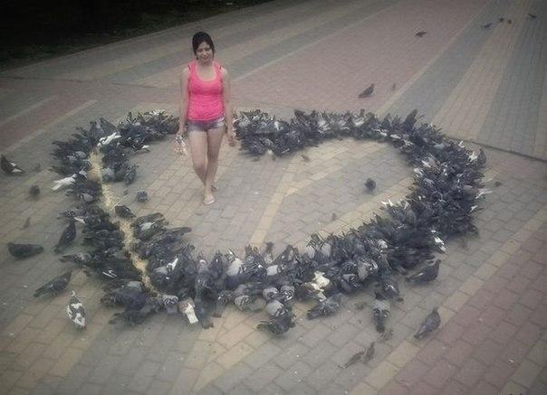 голуби (604x437, 151Kb)