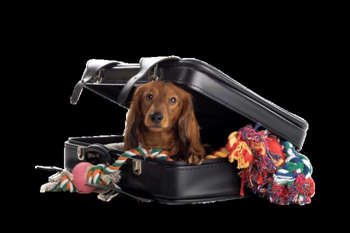 перевозка домашних животных (700x466, 250Kb)