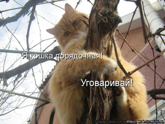 4650338_83722978_kotomatrix_15 (700x525, 188Kb)