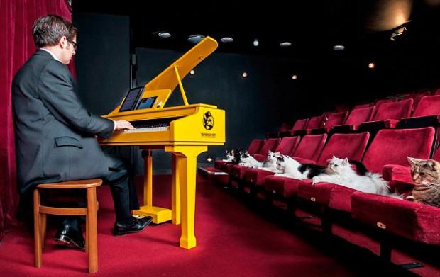 рояль для кошек 3 (620x391, 204Kb)