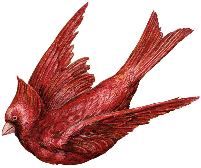 Cardinal-Bird-Image-GraphicsFairy-1024x857 (700x585, 335Kb)