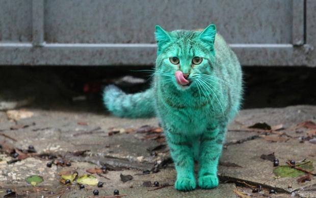 зеленый кот