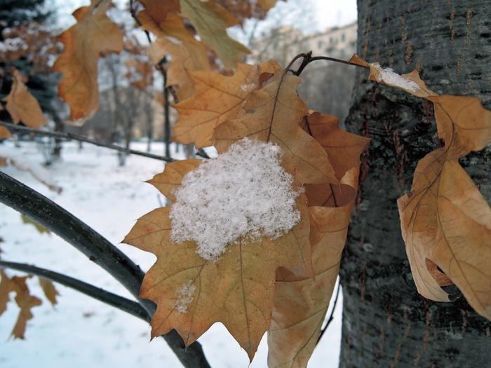 снег листья