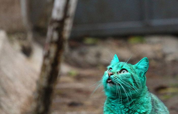 green-cat-varna-bulgaria-1 (700x450, 58Kb)