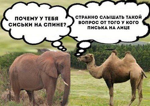 !! Б Верб и слон хик (492x348, 155Kb)