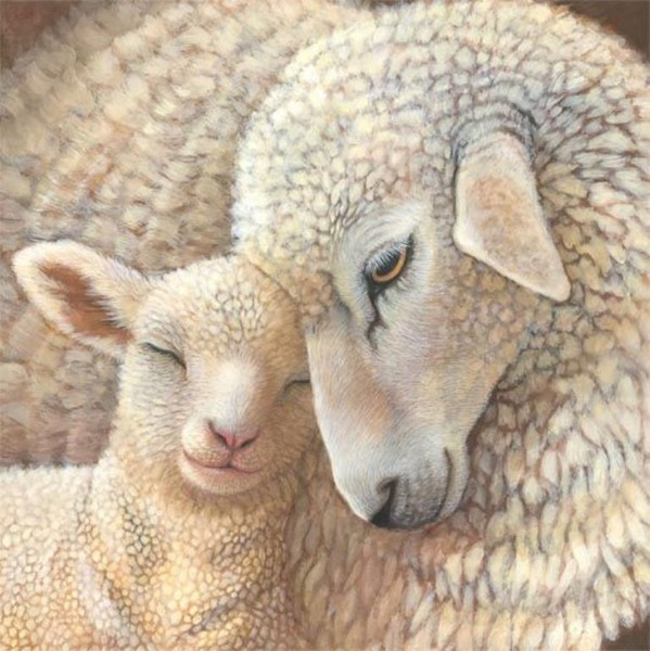 Sheep_1 (599x600, 309Kb)