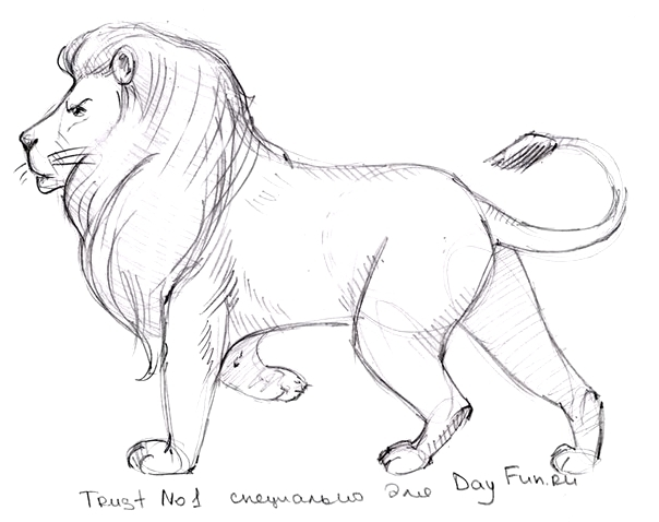 как нарисовать льва1 (604x478, 111Kb)