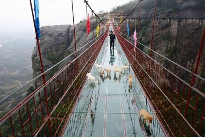 стеклянные мост в китае 2 (700x468, 332Kb)