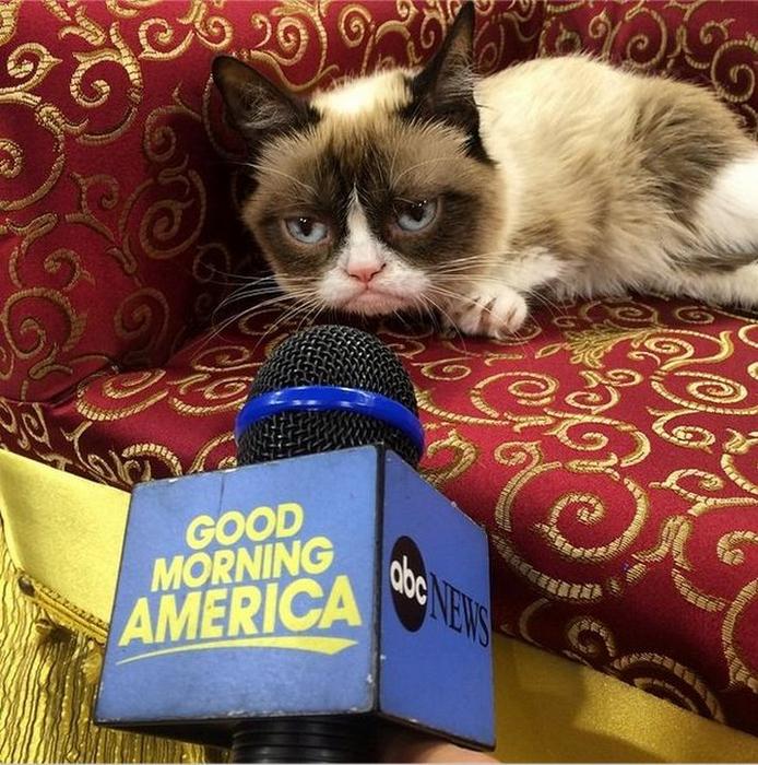 Сердитая кошка Grumpy Cat фото 1 (694x700, 572Kb)