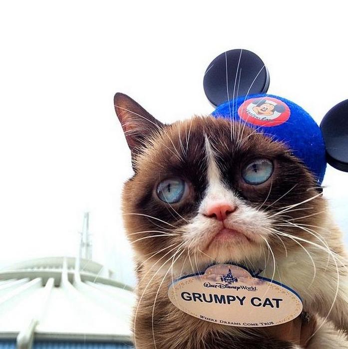 Сердитая кошка Grumpy Cat фото 3 (697x700, 319Kb)