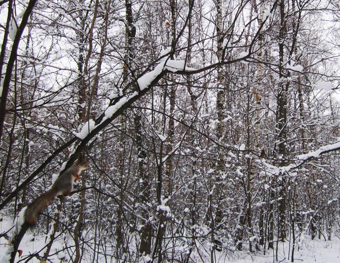 01 Почти зимняя прогулка (700x542, 567Kb)