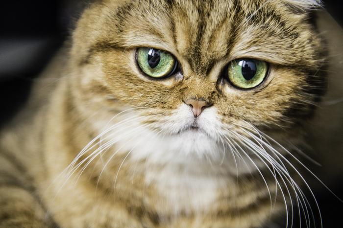 кошка кафи фото 2 (700x466, 370Kb)