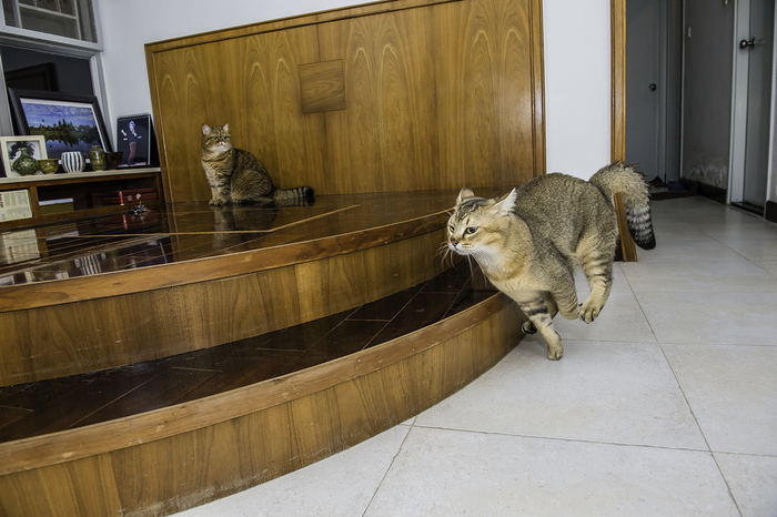 кошка кафи фото 12 (700x466, 355Kb)