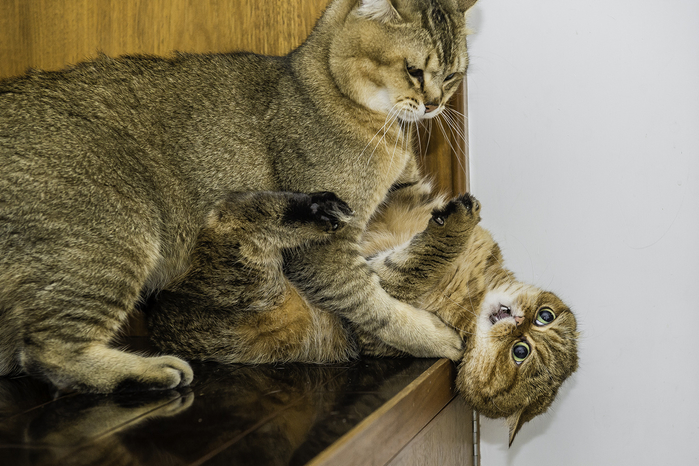 кошка кафи фото 15 (700x466, 374Kb)