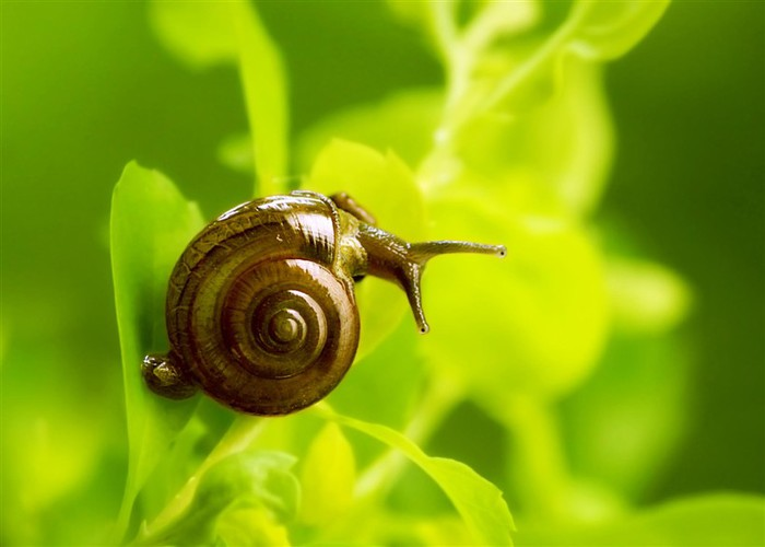 Incredible_Snails_17 (700x500, 48Kb)